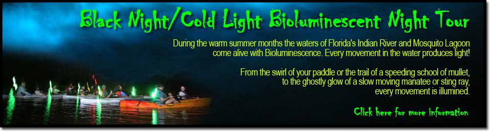 Bioluminescent Kayak Night Tours