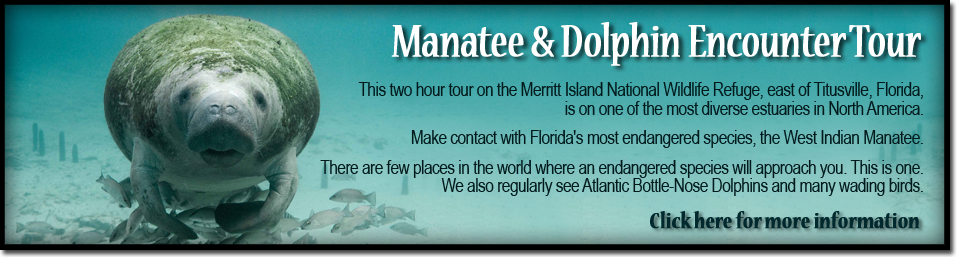 Manatee & Dolphin Encounter Kayak Tours