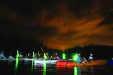 Bioluminescent Night Kayak Tours