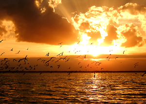 Reconnect with Nature Today and Book Sunset Birding Tour on the Merritt Island Wildlife Refuge with A Day Away Kayak Tours!