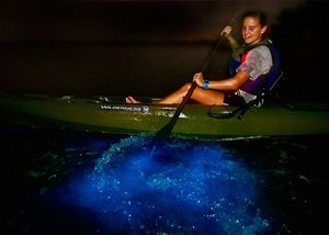 Schedule with A Day Away Kayak Tours and be amazed with a Bioluminescence Dinoflagellate Kayak Vacation in Florida's Indian River and Mosquito Lagoon.